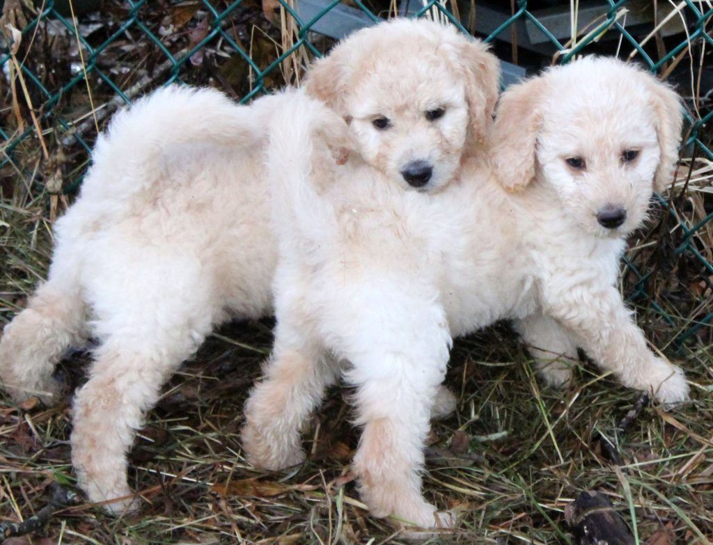 Some of Coral & Finley's pups