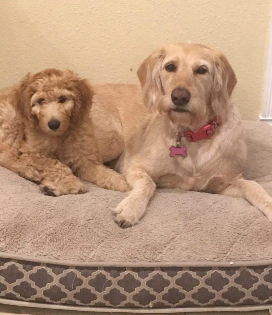 Ziggy & Sadie